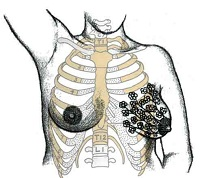 BE02: Anatomy and Physiology of the Lactating Breast